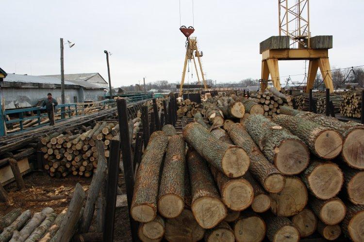 Гослесагентство предлагает отменить мораторий на экспорт леса, но увеличить штрафы за незаконную вырубку