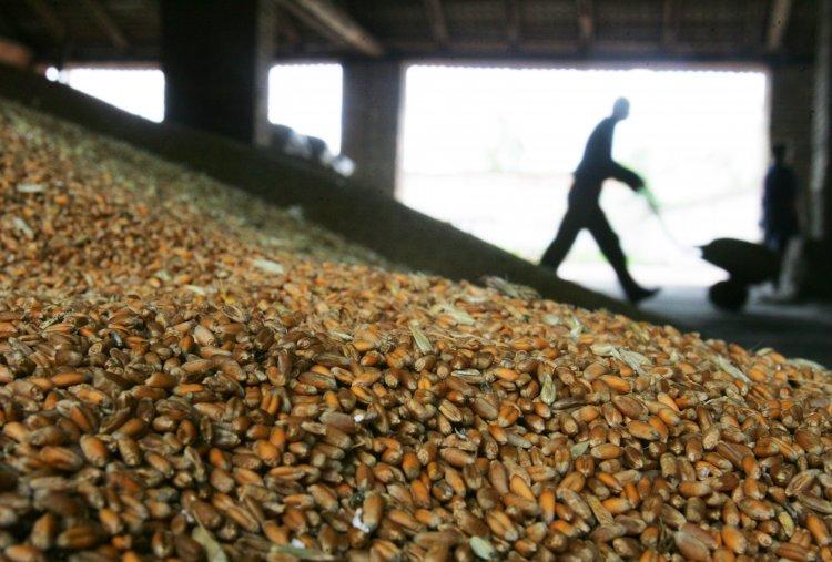 Аграрии за три квартала 2016 года экспортировали своей продукции на $10 млрд