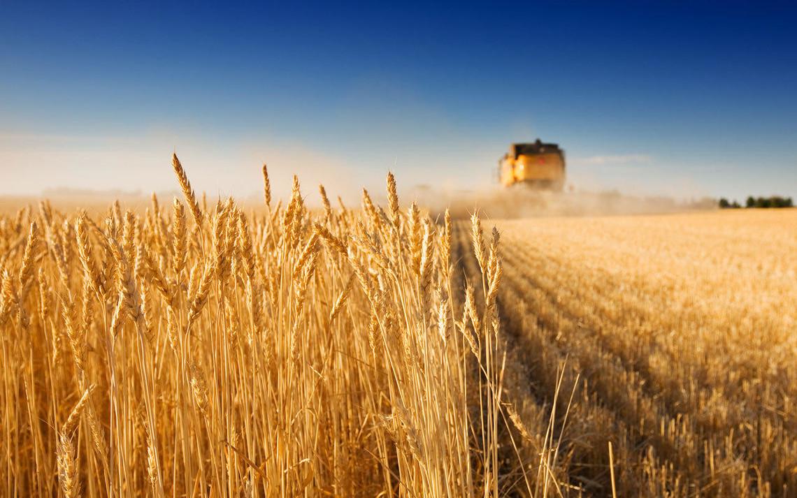 В основном Украина поставляет в ЕС сырье и продукцию аграрного сектора